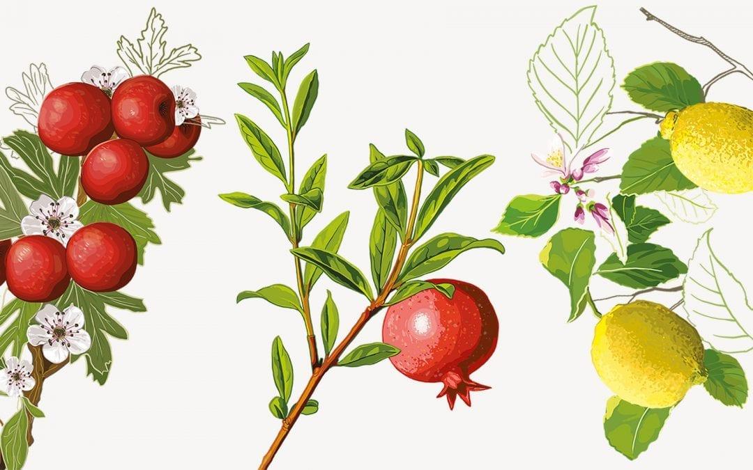 Illustrations for L'Orto in Campania
